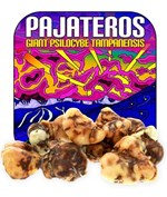 Psilocybe Pajateros - Giant Magic Truffles