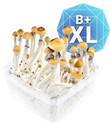B Plus Kit de Cultivo - XL