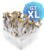 Golden Teacher Growkit - XL