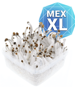 Mexican Kit de Cultivo - XL