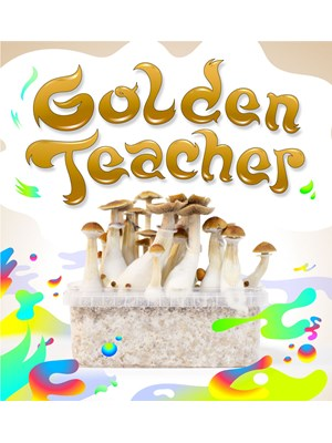 Golden Teacher - Kit De Cultivo De Setas Mágicas